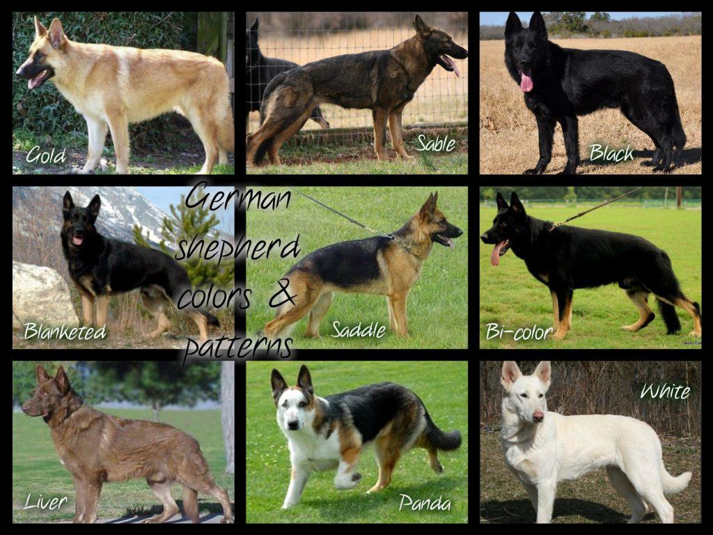 Как определить породу взрослой собаки или щенка