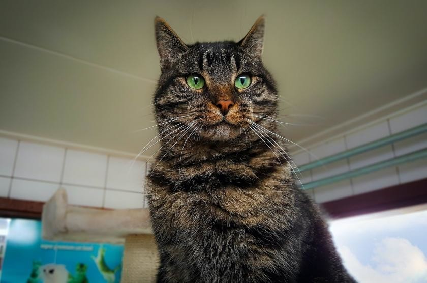 Чем отличается уличный кот от домашнего кота