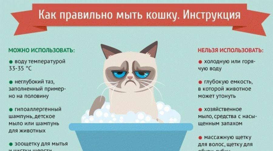Лайфхаки по уходу за кошками - муркин дом