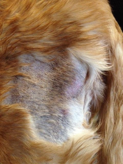 Почему выпадает шерсть у кошек и как это предотвратить