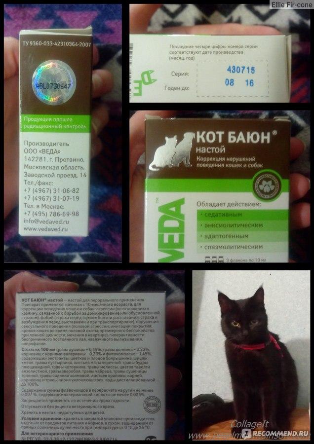Успокоительные средства для кошек: седативные препараты, их применение, противопоказания, когда лучше обойтись без них