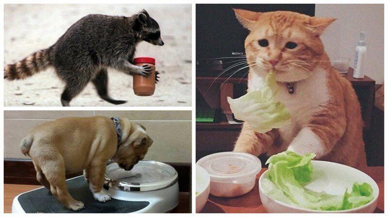 Как помочь кошке похудеть: диета и особенности кормления