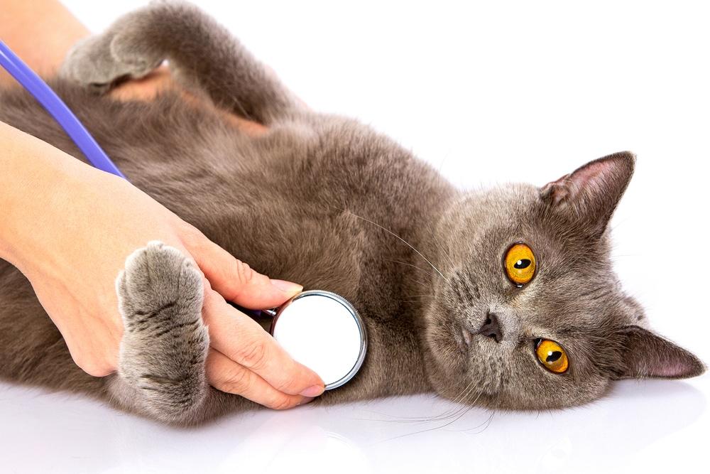 Описание видов опухолей и методов лечения