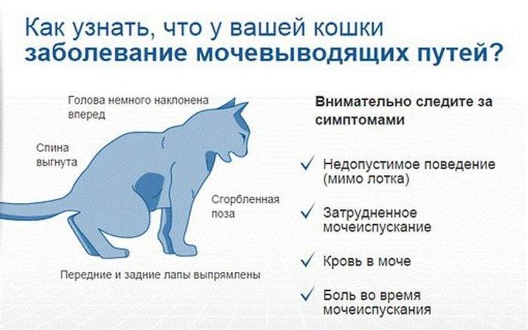 Лечение мочекаменной болезни у котов и кошек