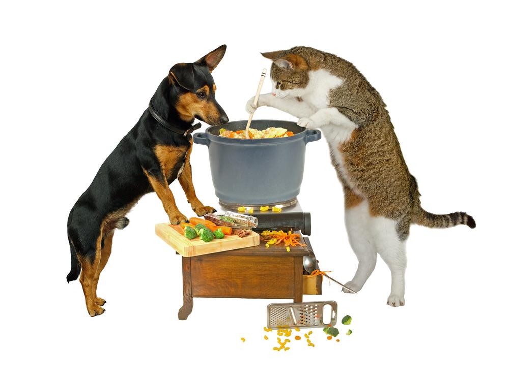 Можно ли кормить котёнка только влажным кормом: плюсы и минусы
