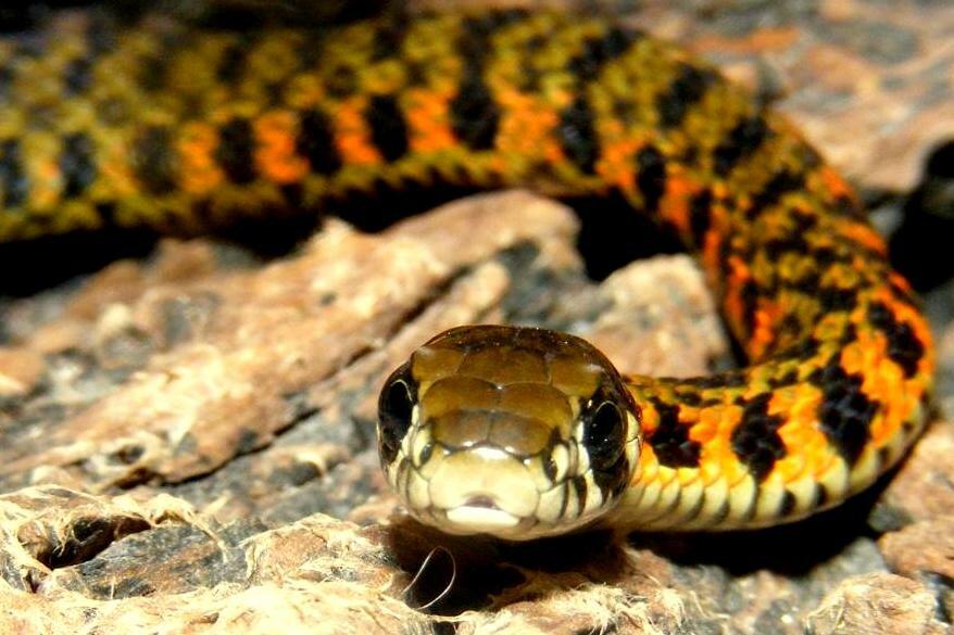 Виды змей и их описание с фото