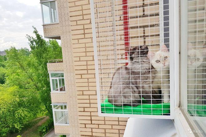 Как избавиться от чужих котов у себя на участке?