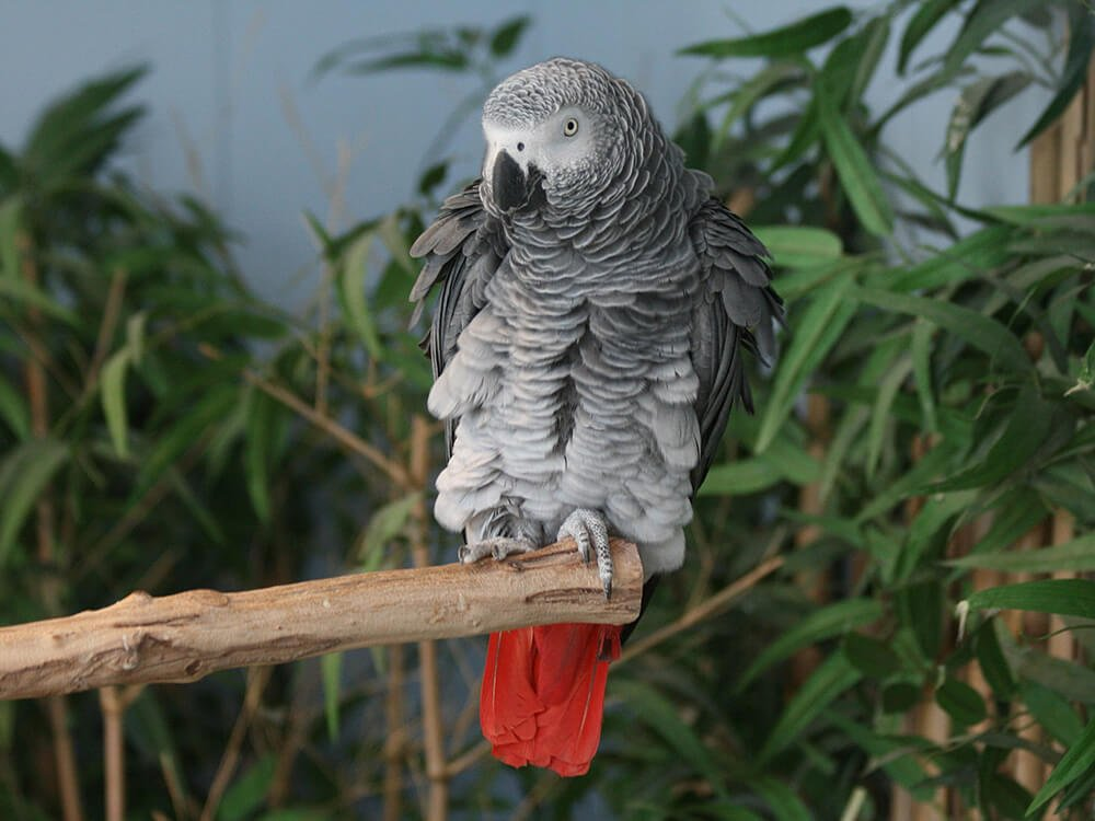 Попугаи (лат. psittacidae)
