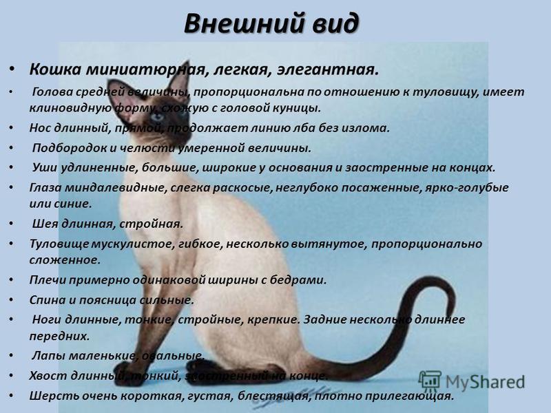 Анатолийская кошка: всё про породу, фото, цена котенка