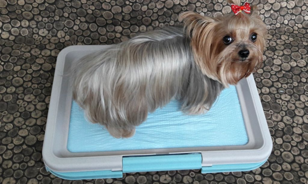 Как приучить щенка ходить на пеленку и к лотку: туалет в квартире для собаки