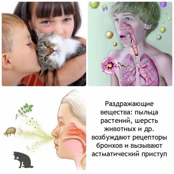 Пищевая аллергия у кошек: симптомы и лечение