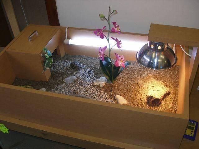 Как сделать террариум для сухопутной черепахи своими руками (чертежи и фото изделий созданных своими руками в домашних условиях из подручных средств и материалов)