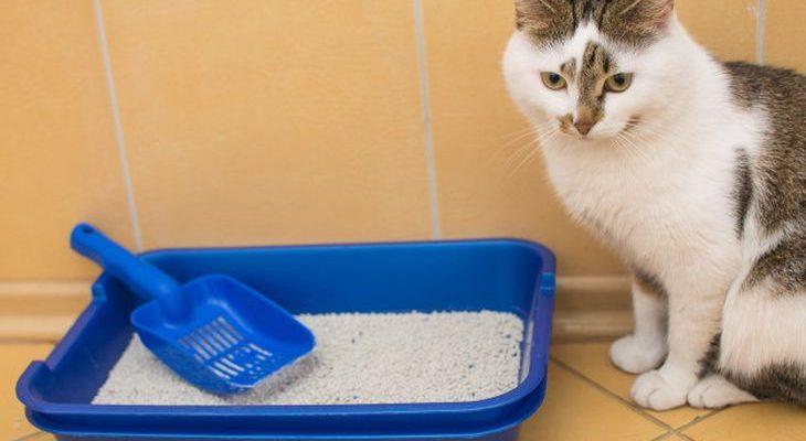 Почему кошка не ходит в лоток – причины и их решения
