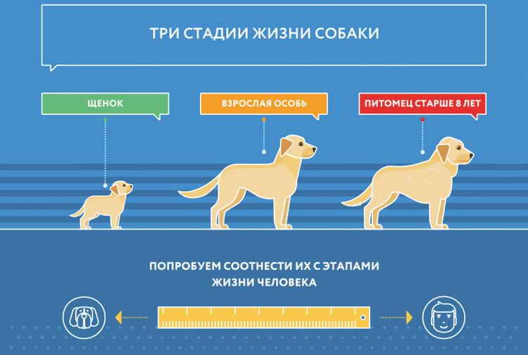 Продолжительность жизни собаки породы шарпей