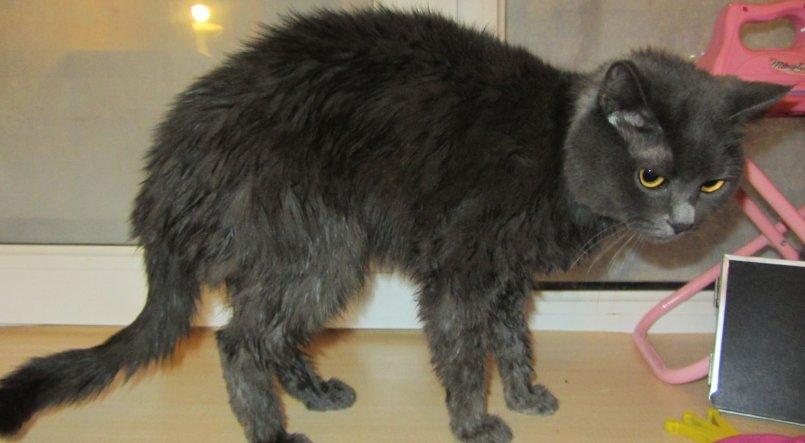 Кошка похудела. что делать? | нвп «астрафарм»