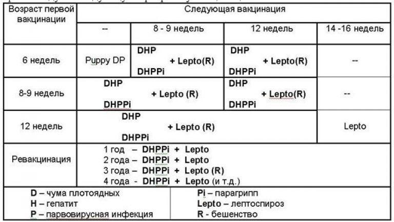 Вакцинация собак: вторая прививка щенку и основные правила вакцинации – pet-mir.ru