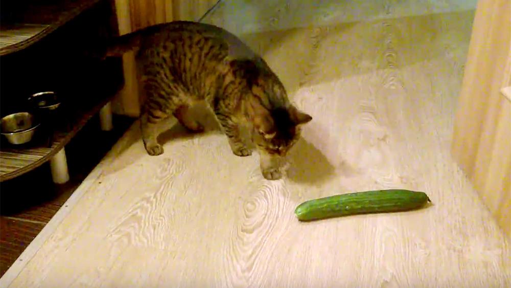 В жару кошки потеют или часто дышат?
