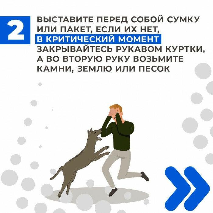Куда пожаловаться на бездомных собак в москве