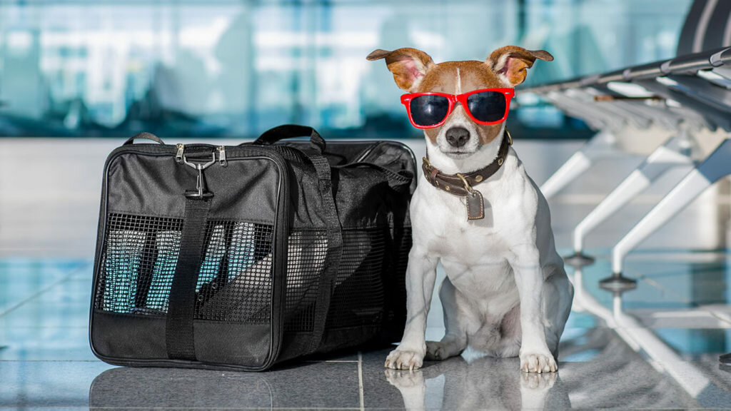 Сколько стоит пристроить животное навремя отпуска
