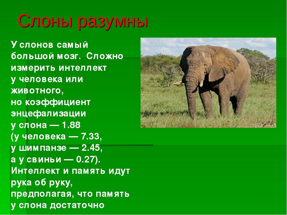 Слон: его повадки и образ жизни, фото