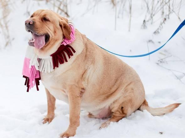 Меню для собаки. статья профессора митина о натуральном кормлении