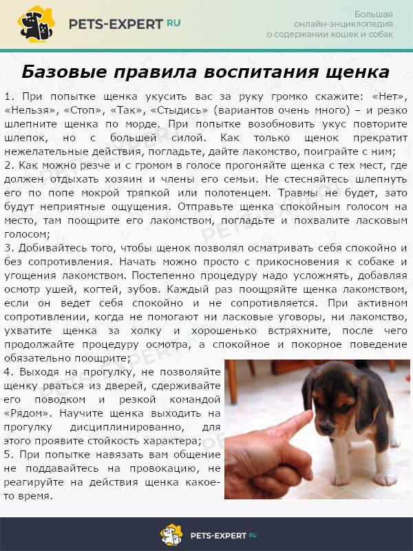 Через сколько можно гулять после комплексной прививки собаке