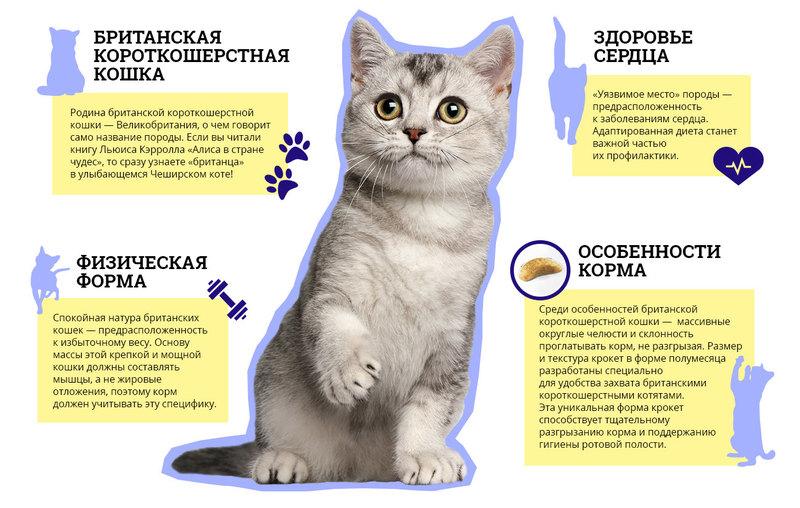 Что нужно для котенка в квартире?