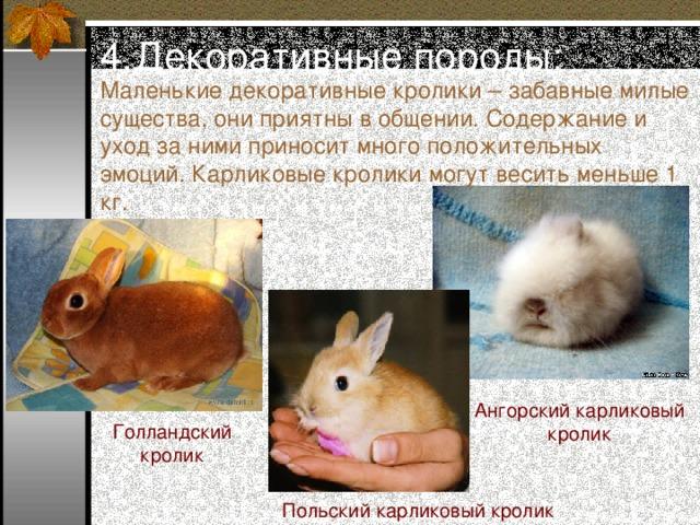 Декоративные кролики сколько живут, как увеличить срок жизни