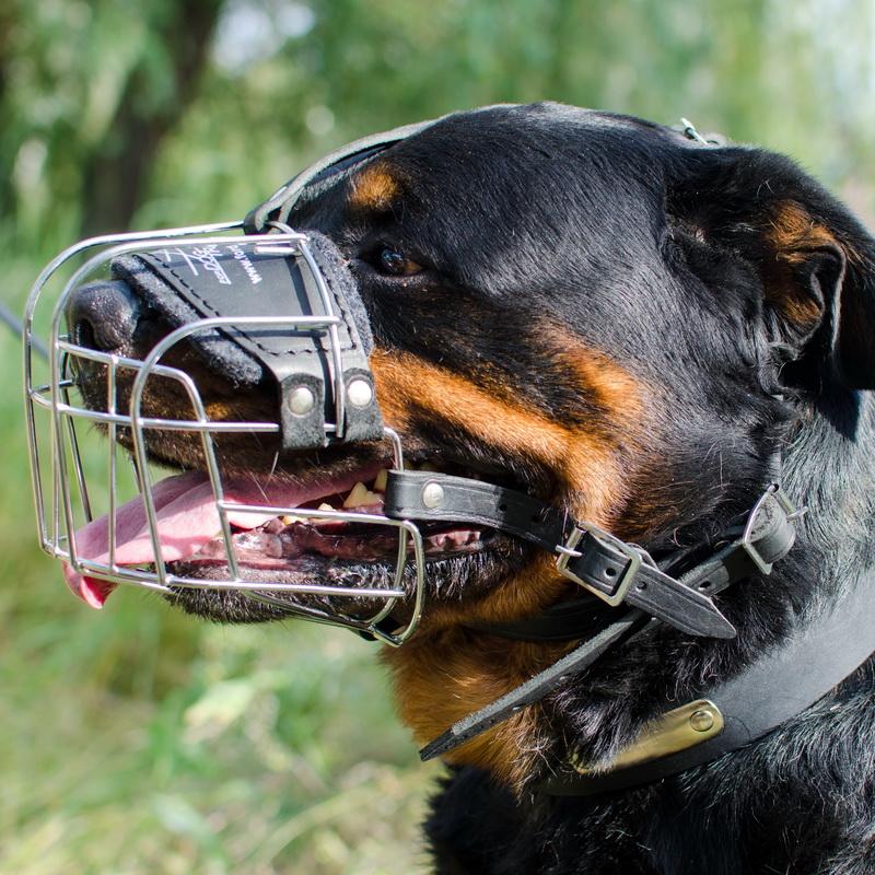 Список собак для выгула в наморднике: какие породы должны так выгуливаться, какой штраф за отсутствие