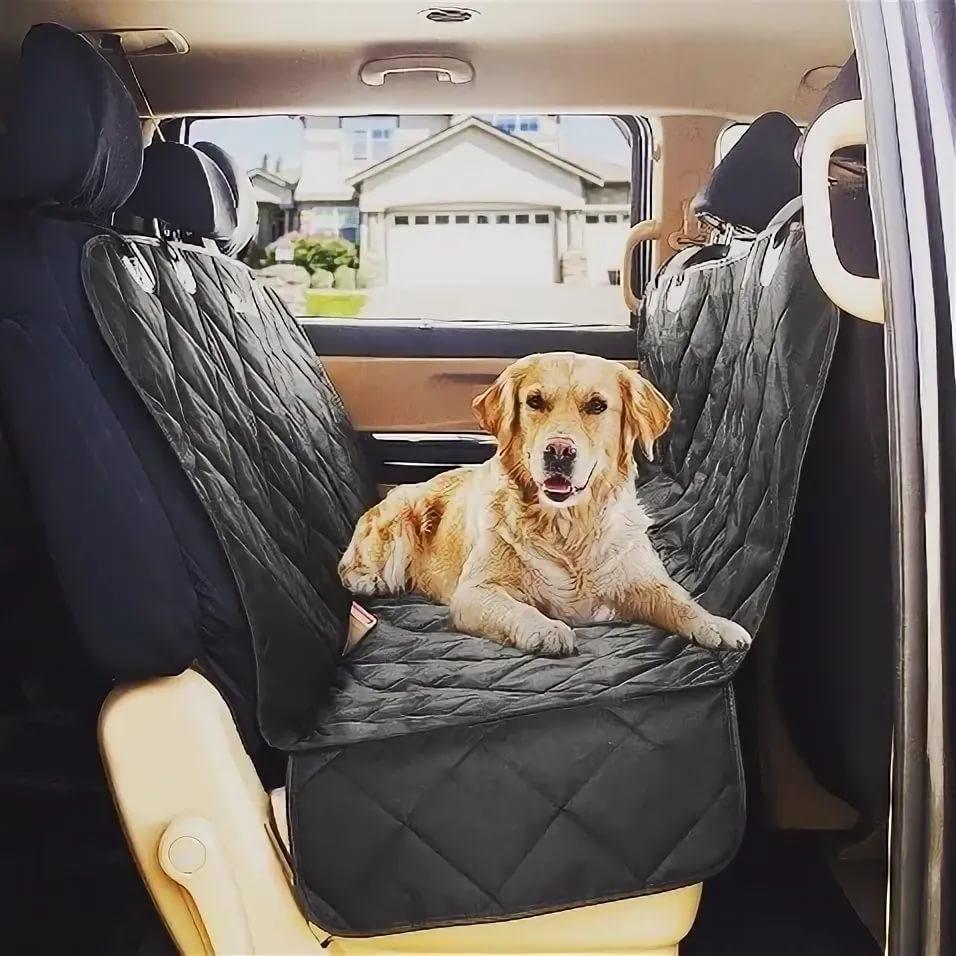 Как перевозить собаку?