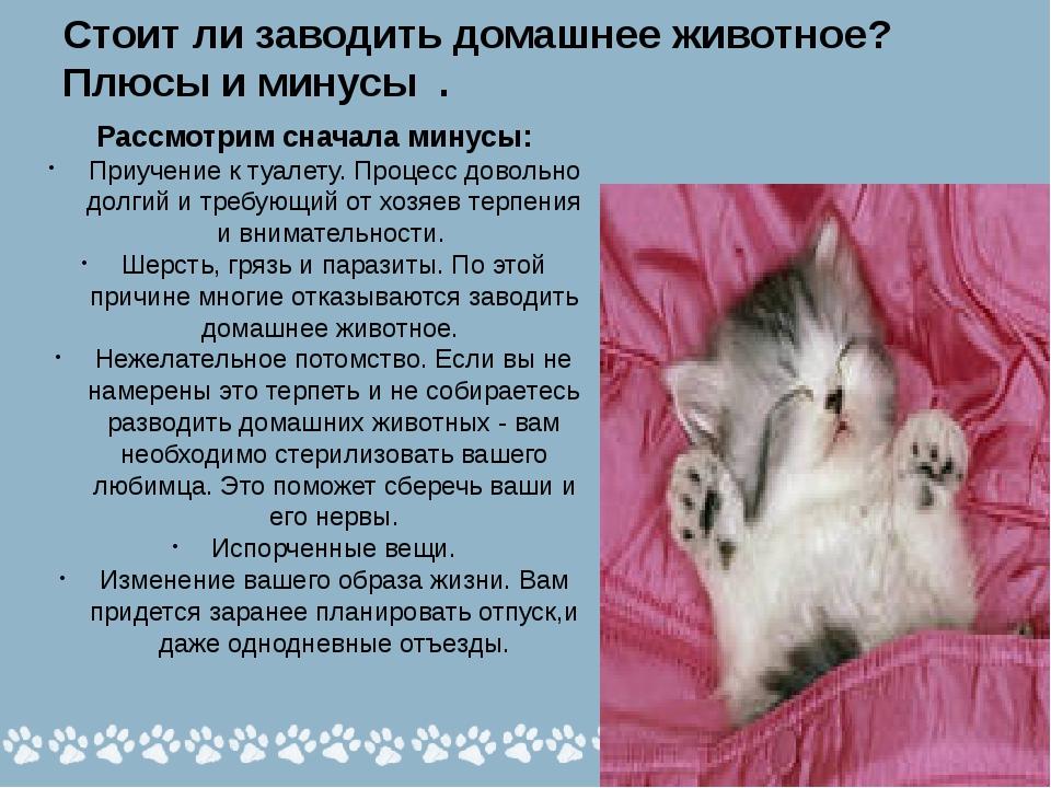 На каких местах в доме спят кошки: 5 критериев выбора, обустройство кошачьего уголка, вред и польза совместного сна