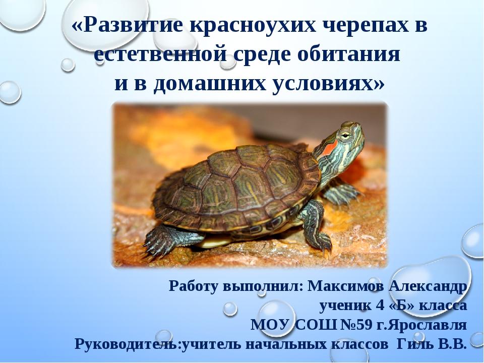 Гигантская черепаха живет до 200 лет: 10 самых долгоживущих существ на планете