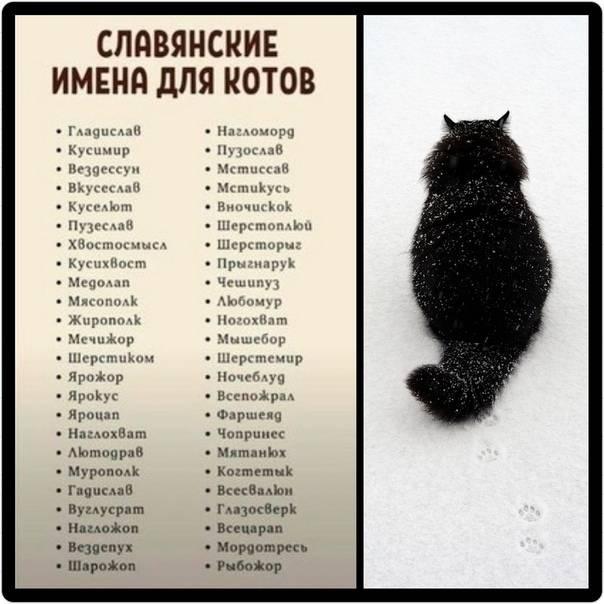 Имена для котов: 500+ вариантов как назвать кота прикольно