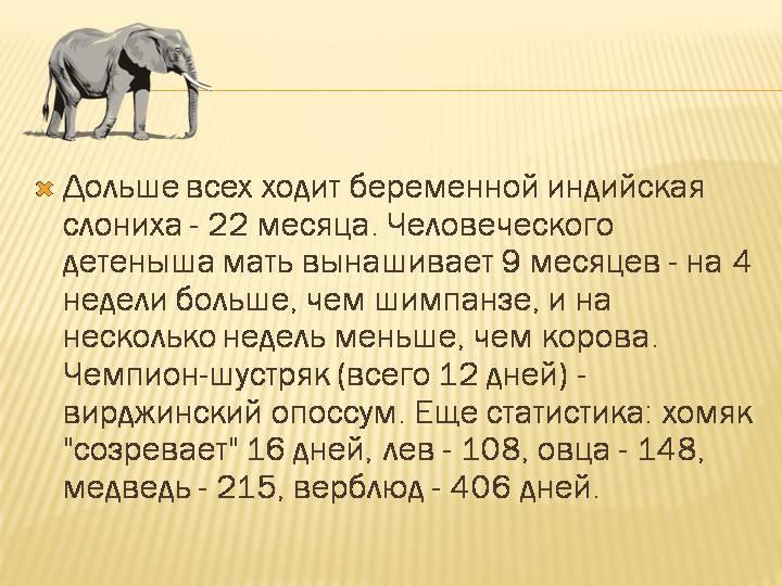Интересные факты о слонах: топ-10