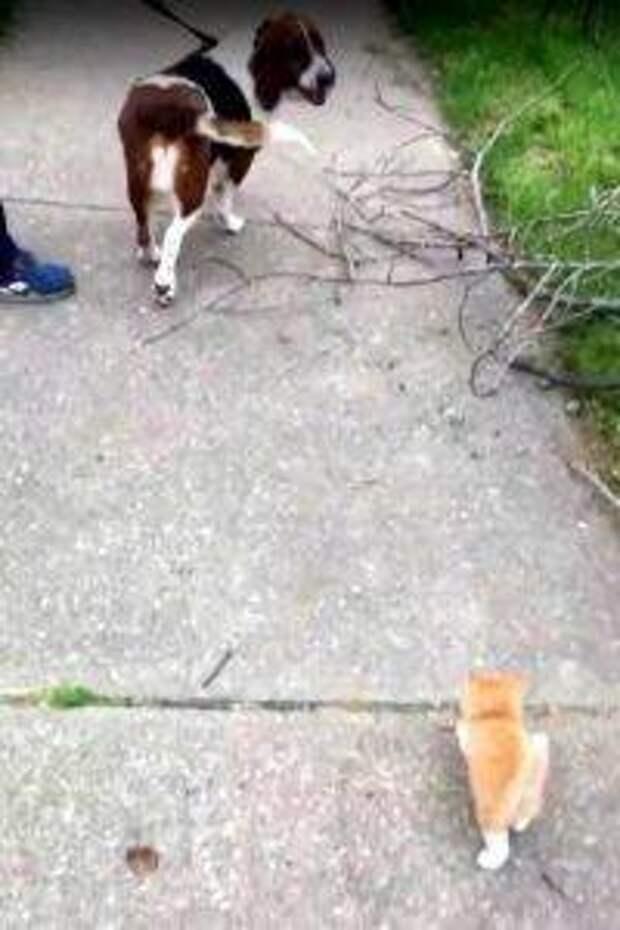 11 причин, почему кошка убегает, и как ее остановить