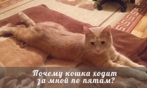 Почему кошка постоянно мяукает и ходит за мной