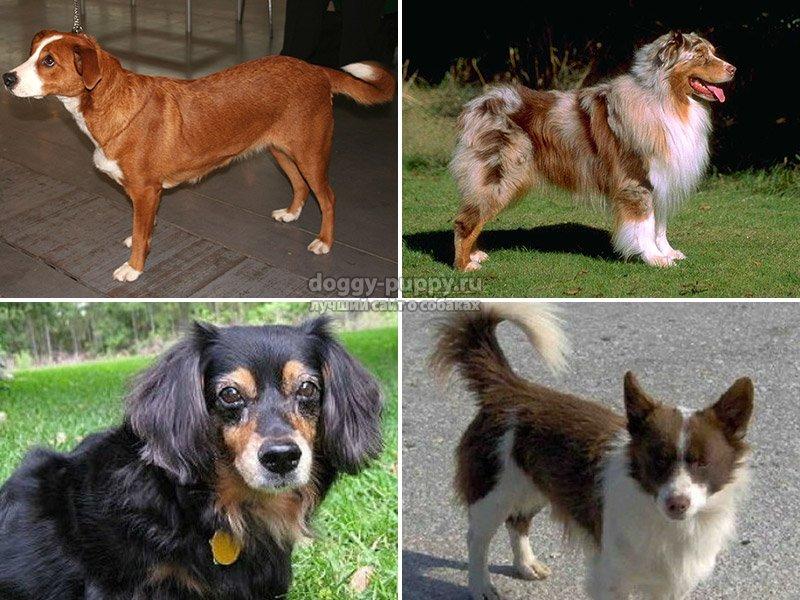6 истинно греческих пород собак, выведенных еще в античности. греческая порода собак
