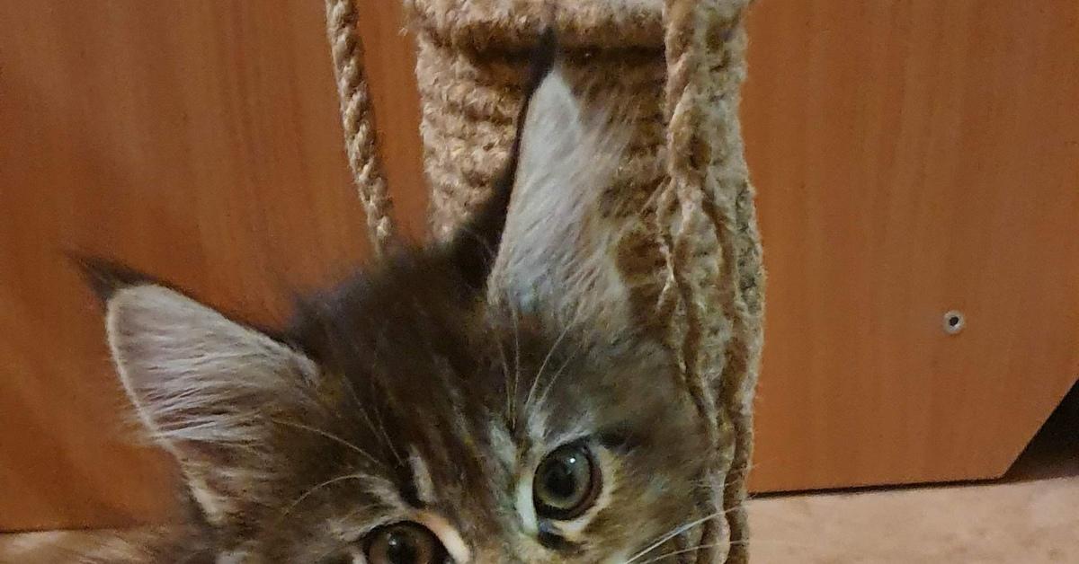 Трехцветные кошки приносят счастье: интересные факты и приметы - досуг