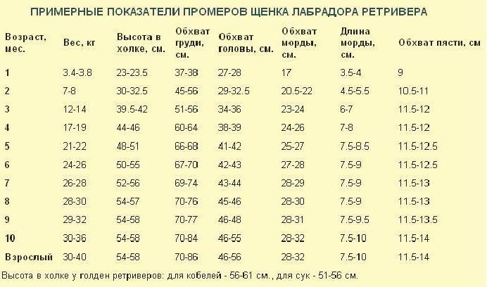 ᐉ до какого возраста растет щенок немецкой овчарки? - zoomanji.ru