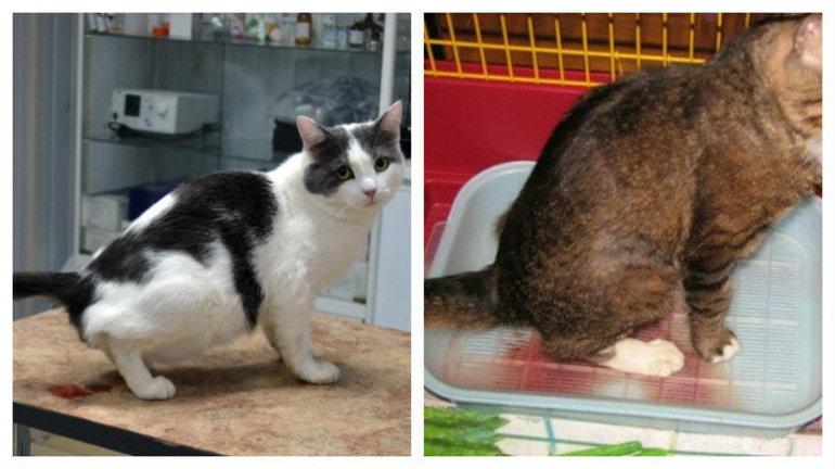4 способа, как приучить к лотку взрослую кошку