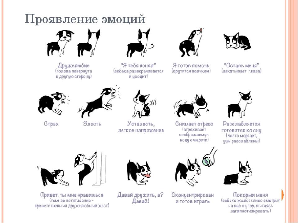 Дрессировка собак: список команд, как дрессировать