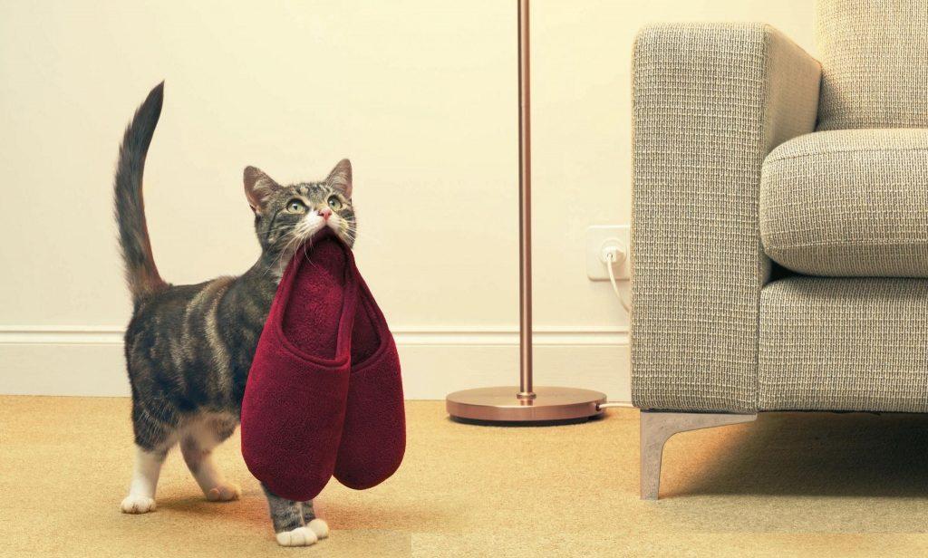 Дрессировка кошек: лучшие способы, техники и приемы по дрессировке кота, и котенка