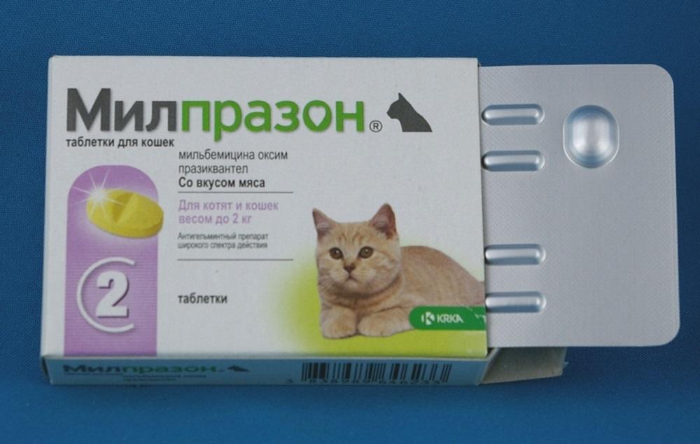 Успокоительное для кошек: домашние средства, таблетки, капли | сайт «мурло»