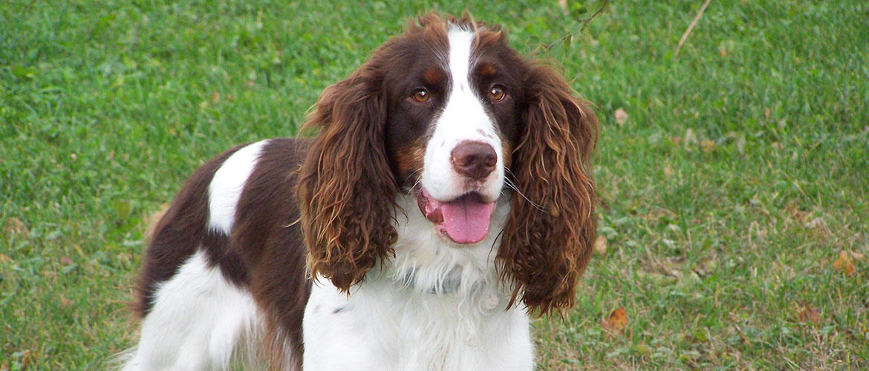 14 пород собак, которые идеально подходят для ленивых людей