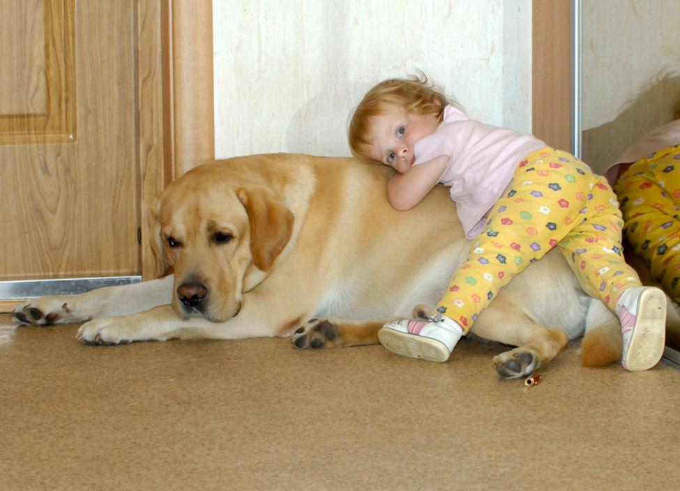 Какую собаку завести ребенку?