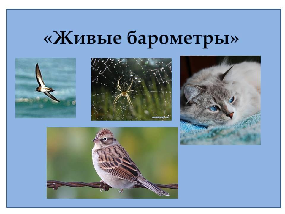 Какие домашние животные - предсказатели погоды: «кошачий» прогноз