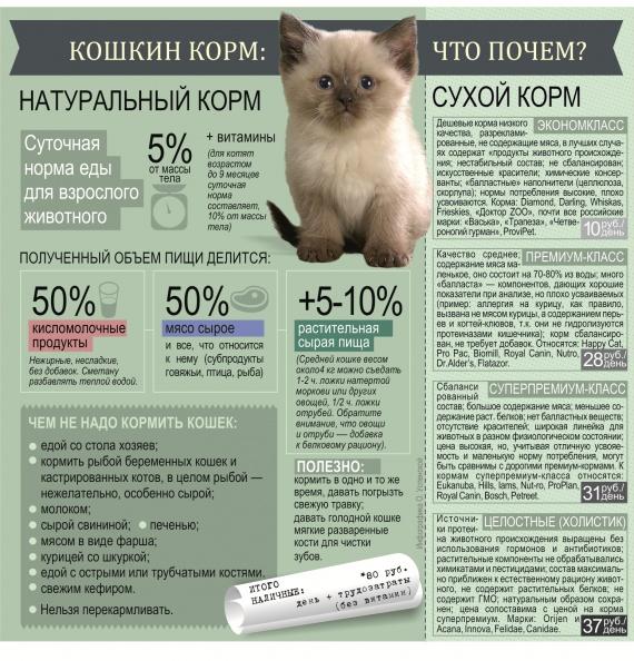 """Правила прикорма котят, особенности рациона, оптимальный возраст   блог ветклиники """"беланта"""""""