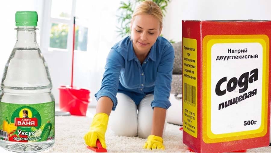 Убрать запах собачьей мочи с дивана - 11 рецептов, как вывести запах и пятна в домашних условиях
