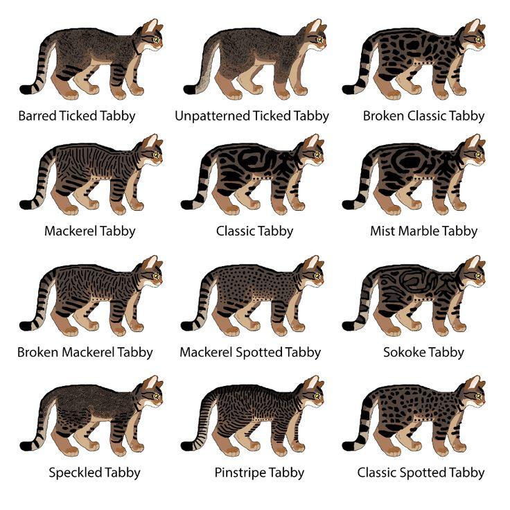 Полосатые коты (30 фото): породы серых, коричневых и полосато-пятнистых кошек с названиями, отличия обычных и породистых котят в полоску