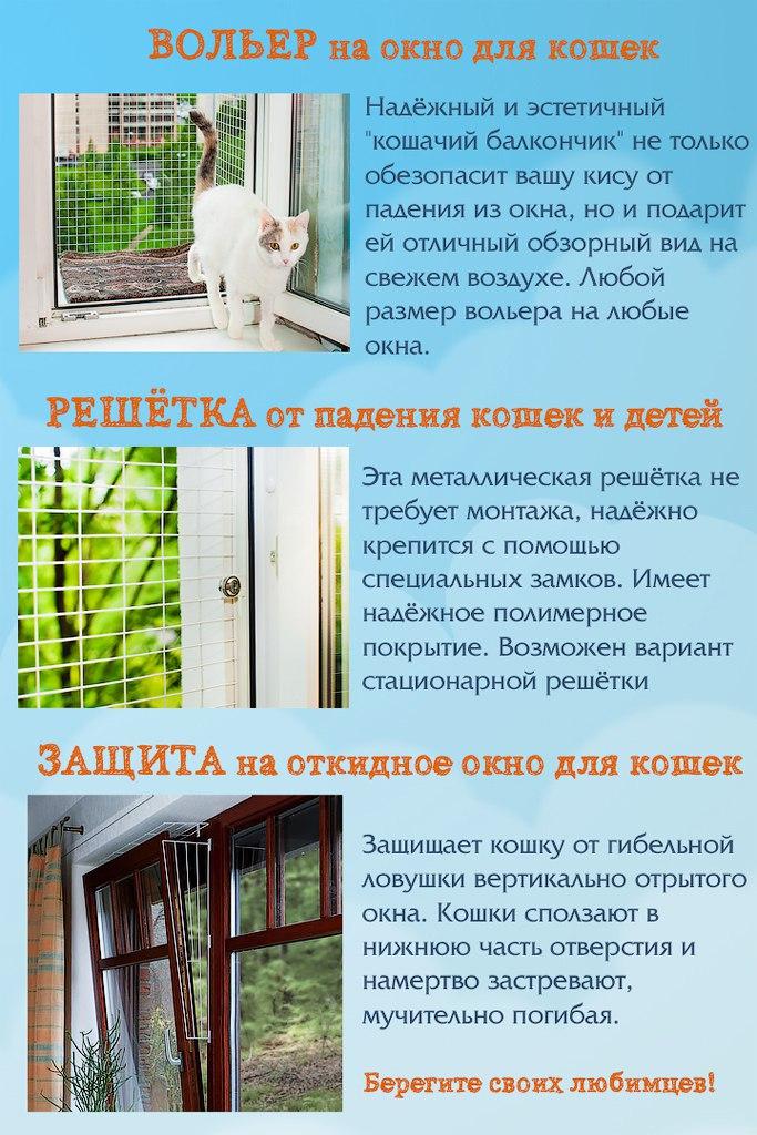 Кошка – лучшая защита вашего дома от нечисти и дурного глаза, выберите свою :: инфониак